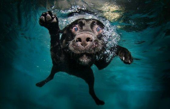 Cane felice che nuota